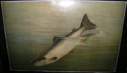 A. D. Turner & Frank Johnson 1902 LG Folio Fish Print. Salmon | Albion Prints